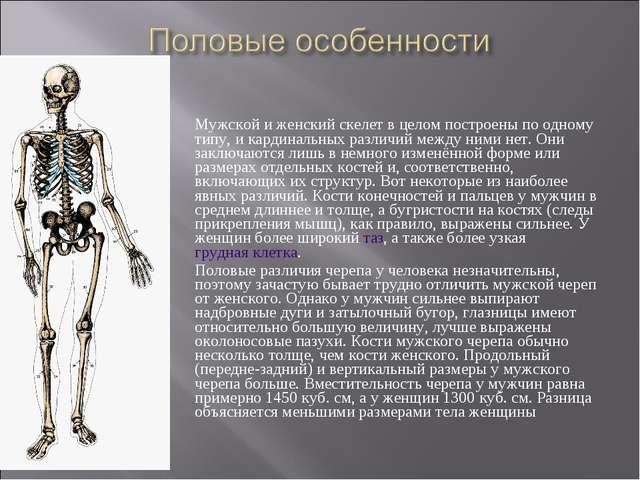 Мужской и женский скелет в целом построены по одному типу, и кардинальных раз...