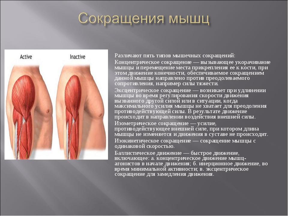 Различают пять типов мышечных сокращений: Концентрическое сокращение— вызыва...