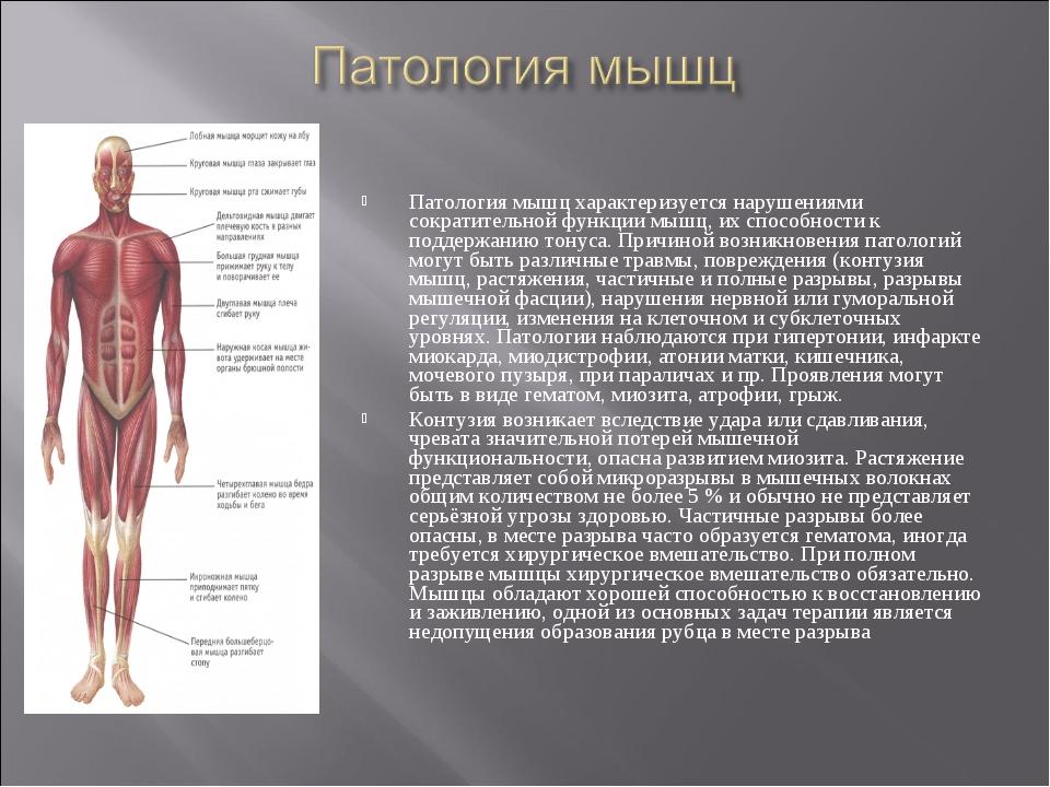 Патология мышц характеризуется нарушениями сократительной функции мышц, их сп...