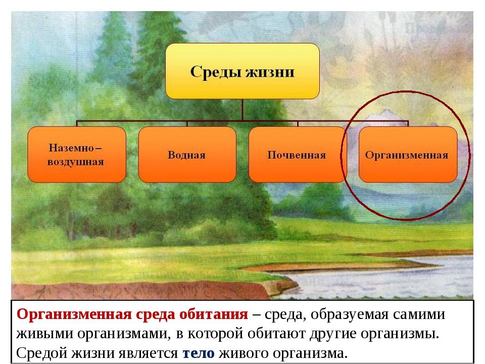 Организменная среда обитания – среда, образуемая самими живыми организмами, в...