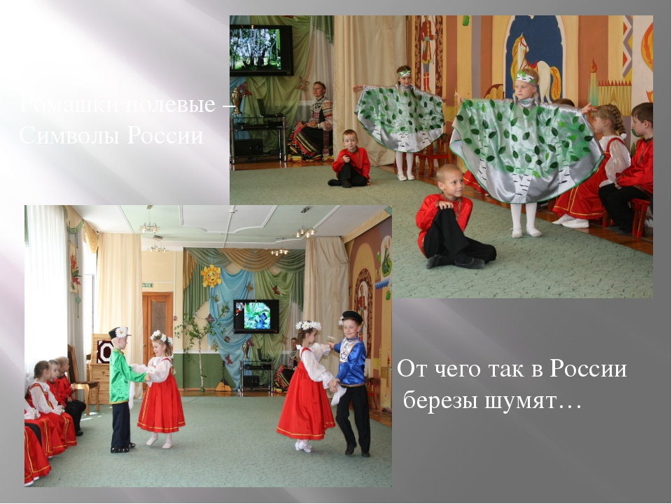 Ромашки полевые – Символы России От чего так в России березы шумят…