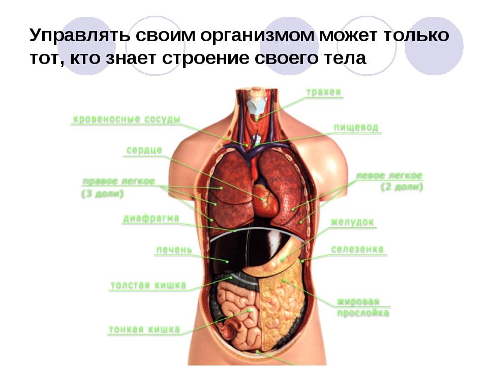 Управлять своим организмом может только тот, кто знает строение своего тела