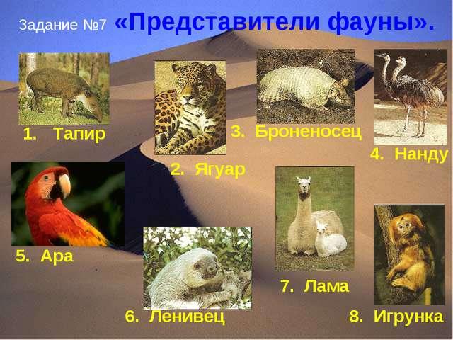 Задание №7 «Представители фауны». 8. Игрунка Тапир 2. Ягуар 3. Броненосец 4....