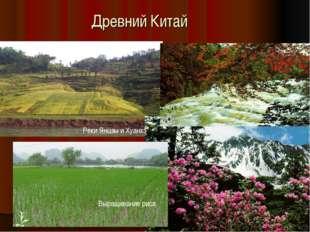 Древний Китай Реки Янцзы и Хуанхэ Выращивание риса