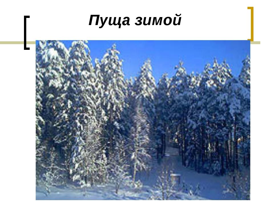 Пуща зимой