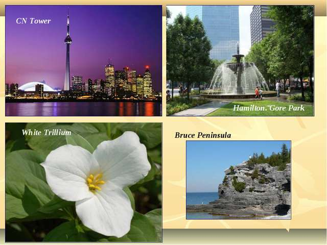 Hamilton. Gore Park CN Tower White Trillium Bruce Peninsula