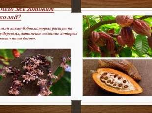 Из чего же готовят шоколад? Из семян какао-бобов,которые растут на какао-дере