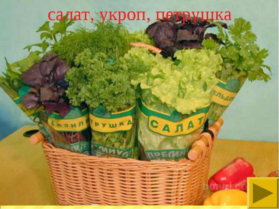 салат, укроп, петрушка