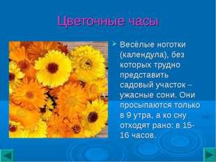 Цветочные часы Весёлые ноготки (календула), без которых трудно представить са