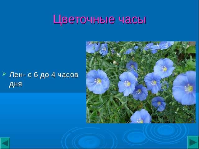 Цветочные часы Лен- с 6 до 4 часов дня