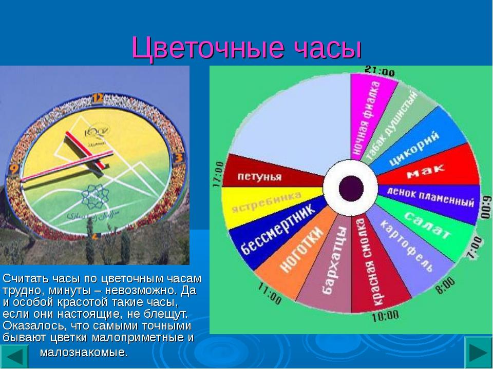 Цветочные часы Считать часы по цветочным часам трудно, минуты – невозможно. Д...