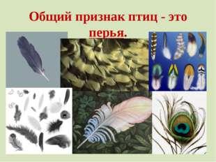 Общий признак птиц - это перья.