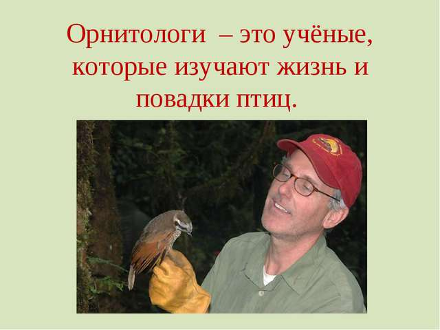 Орнитологи – это учёные, которые изучают жизнь и повадки птиц.