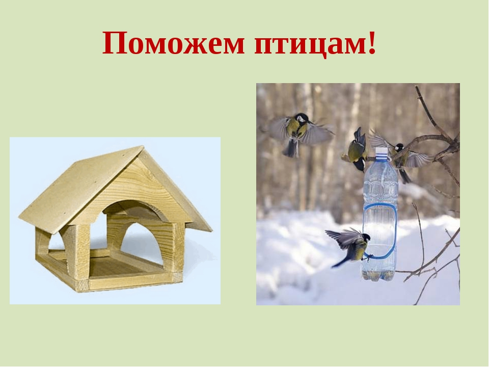 волосы картинка как помочь птицам зимой сама девушка