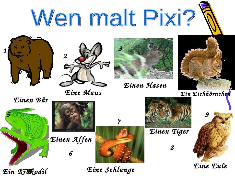 Einen Bär Eine Maus Einen Hasen Ein Eichhörnchen Ein Krokodil Einen Affen Ein...