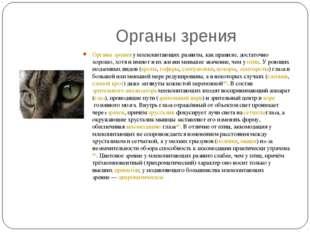 Органы зрения Органы зренияу млекопитающих развиты, как правило, достаточно