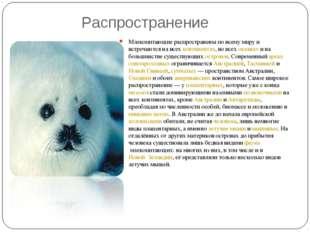 Распространение Млекопитающие распространены по всему миру и встречаются на