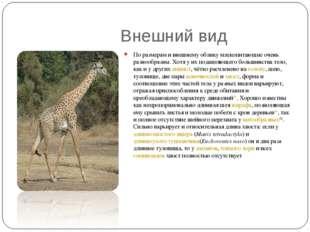 Внешний вид По размерам и внешнему облику млекопитающие очень разнообразны.
