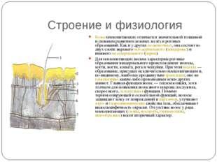 Строение и физиология Кожамлекопитающих отличается значительной толщиной и