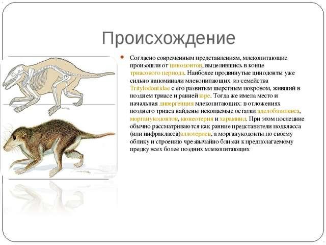 Происхождение Согласно современным представлениям, млекопитающие произошли о...