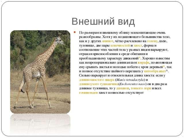 Внешний вид По размерам и внешнему облику млекопитающие очень разнообразны....
