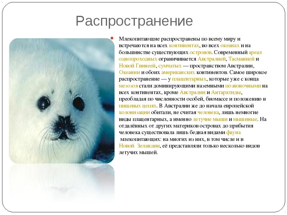 Распространение Млекопитающие распространены по всему миру и встречаются на...