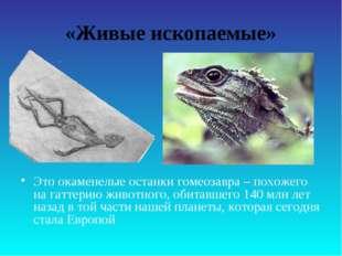 «Живые ископаемые» Это окаменелые останки гомеозавра – похожего на гаттерию ж