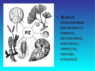 Живые ископаемые (мечехвост, гинкго, неопилина, наутилус, лингула, хвощи, пла