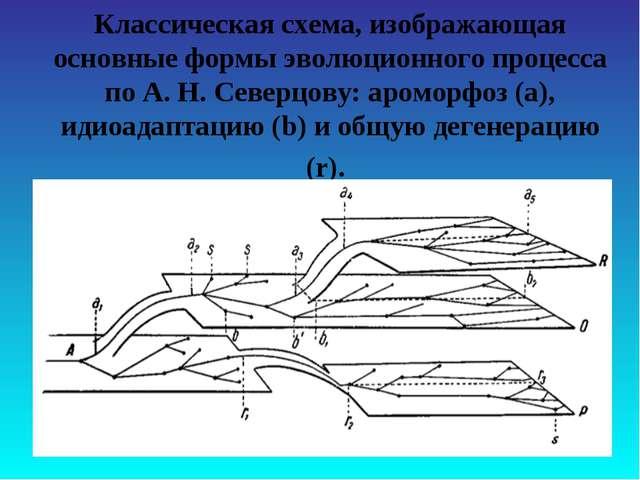 Классическая схема, изображающая основные формы эволюционного процесса по А....