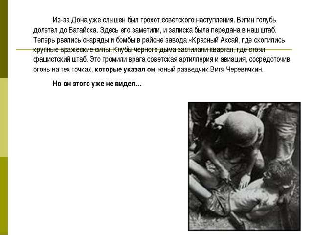 Из-за Дона уже слышен был грохот советского наступления. Витин голубь долет...