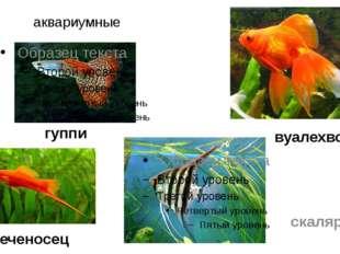 аквариумные меченосец скалярий вуалехвост гуппи