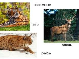 наземные олень тигр рысь