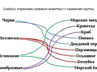 Соедини стрелками названия животных с названием группы Черви Морские звезды К
