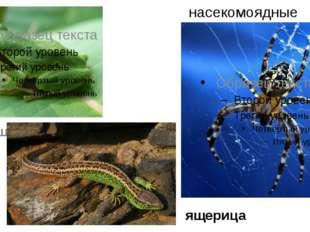 насекомоядные паук квакша ящерица