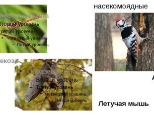 насекомоядные Летучая мышь стрекоза дятел