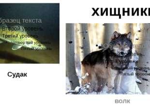 Судак волк хищники