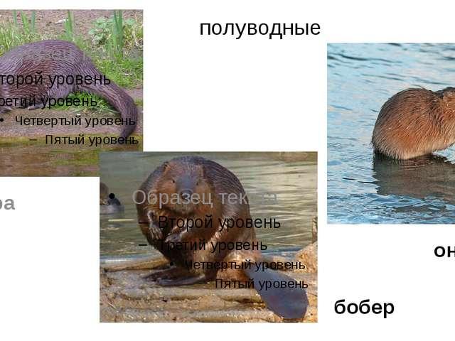 полуводные бобер выдра ондатра