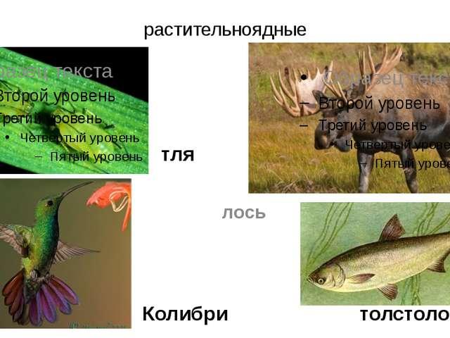 растительноядные Колибри лось толстолобик тля