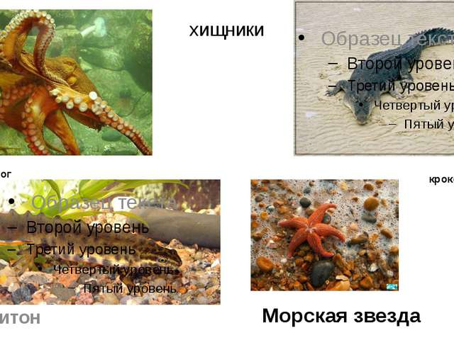хищники осьминог тритон Морская звезда крокодил
