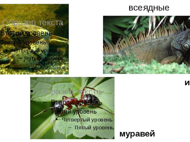 всеядные муравей краб игуана