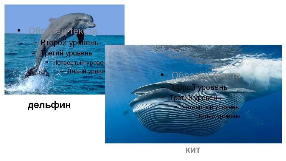 дельфин кит