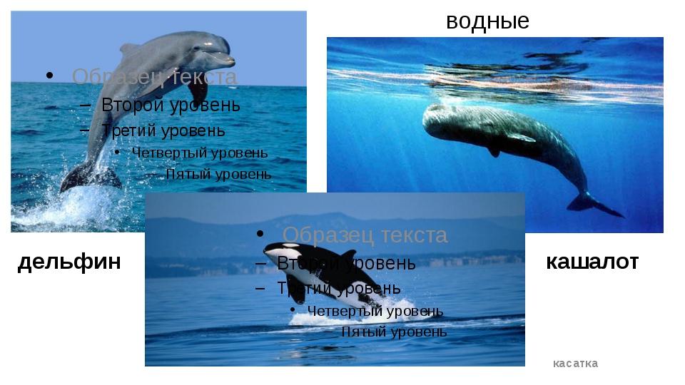водные дельфин касатка кашалот