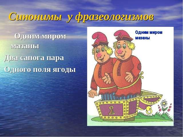 Синонимы у фразеологизмов Одним миром мазаны Два сапога пара Одного поля ягод...