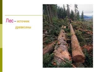 Лес – источник древесины
