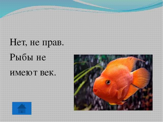 Нет, не прав. Рыбы не имеют век.