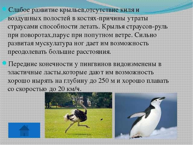 Пингвины не имеют пуховых перьев. Крошечные пушинки имеются только на стержн...