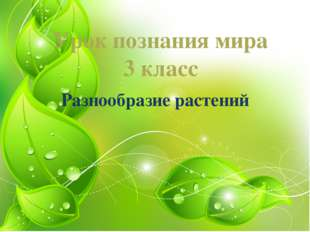 Урок познания мира 3 класс Разнообразие растений