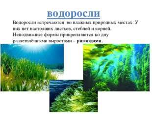 водоросли Водоросли встречаются во влажных природных местах. У них нет настоя