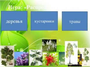 Игра: «Распредели растения» деревья кустарники травы