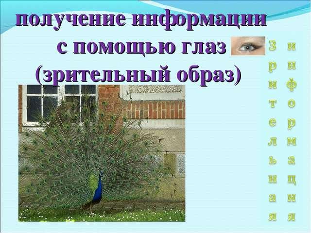 получение информации с помощью глаз (зрительный образ)